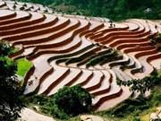 Trek dans les rizières en terrasses de Hoàng Su Phi