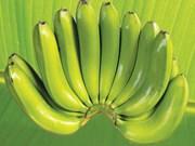 Développement des potentiels d'exportation des bananes de LaBa