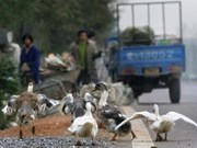 Déploiement de mesures de lutte anti-grippe A (H7N9)
