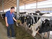 Première usine de transformation d'alimentation pour les vaches laitières à Môc Chau