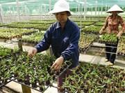 Les hautes technologies aident l'horticulture à fleurir