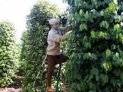 La nouvelle ruralité à Dak Lak a davantage de moyens