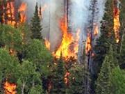Chaleur et sécheresse aggravent le risque d'incendies de forêt