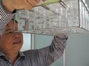 Un moustique programmé pour lutter contre la dengue