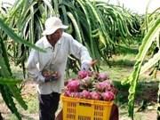 Aide néo-zélandaise aux producteurs vietnamiens de fruit du dragon