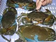 L'UE la plus friande de crabes et crustacés vietnamiens