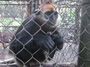 Diminuer la consommation des animaux sauvages au Vietnam