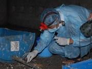 Grippe aviaire : aucun foyer n'est détecté ces trois semaines