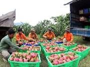 Fruits et légumes seront exportés vers l'Europe