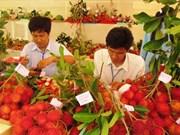 Fruits : aider les producteurs à exporter en Amérique