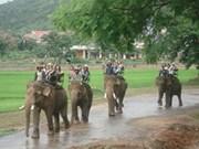 Dak Lak apprend à préserver les éléphants domestiques