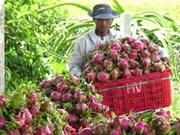 Fruits et légumes: l'objectif d'un milliard de dollars d'exportations est faisable