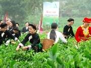 Le festival du thé de Thai Nguyên prévu en novembre