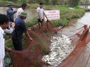 Au Nord, poissons et riz s'épanouissent dans les champs