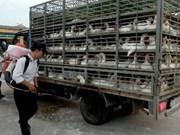 La grippe aviaire est maîtrisée dans l'ensemble du pays