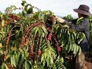 Lancement de nombreux nouveaux produits de café