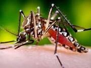 Aide australienne pour éradiquer la dengue au VN