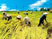 Production agricole: bonne croissance au premier semestre