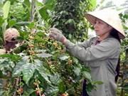 Aide américaine aux caféiculteurs de Lam Dong