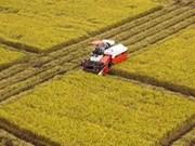 Riziculture : gestion des nuisibles dans le delta du Mékong