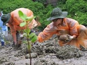 Les étudiants vietnamiens et japonais contribuent à la protection de l'environnement