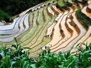 Prochaine Semaine culturelle, sportive et touristique des rizières en gradins