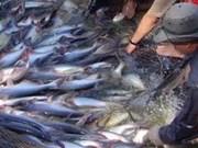 Pangasius : l'UE soutient la production durable au Vietnam