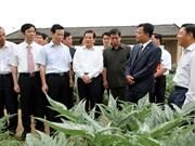 10.000 ha de plantes médicinales à Hà Giang
