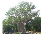Thanh Hoa, cinq arbres classés patrimoines nationaux