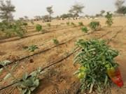 L'agriculture intelligente creuse son sillon face au climat