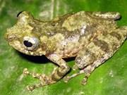 Découverte de nouvelles espèces animales au Vietnam