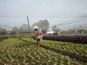 Développer des légumes biologiques aux normes VietGAP