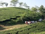 Succès du project de restauration des forêts à Phu Tho