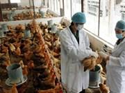Renforcement de la lutte contre la grippe aviaire