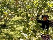 Donafoods exporte la noix de cajou vers le Moyen-Orient
