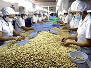 Le Vietnam, premier exportateur mondial de noix de cajou