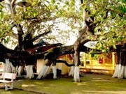 Un banian de 13 racines reconnu arbre de l'héritage