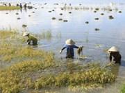 Les produits agricoles vietnamiens prêts à bénéficier du TPP