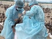 Découverte d'un cas de grippe A/H5N1 à Lao Cai