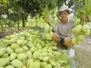 Accélération des exportations de fruits et légumes au Japon