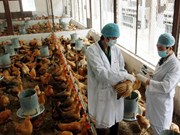 Tout le pays renforce sa lutte contre la grippe aviaire