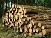 Bois: plus de 6 milliards de dollars d'exportation visés cette année