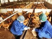 La grippe aviaire touche 21 villes et provinces