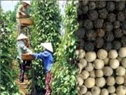 Rebond des exportations de poivre en janvier