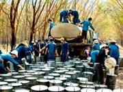 Le Vietnam, 3e producteur mondial de caoutchouc naturel