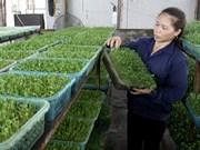 Les légumes biologiques représentent environ 10% des cultures maraîchères totale