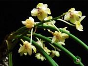 Nouvelles espèces de faune et flore découvertes au Vietnam