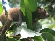 Le Vietnam entend diminuer la consommation d'animaux sauvages