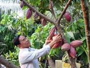 Les entreprises étrangères de chocolat débarquent au Vietnam