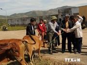 Tay Nguyen: mise en oeuvre d'un projet de réduction de la pauvreté